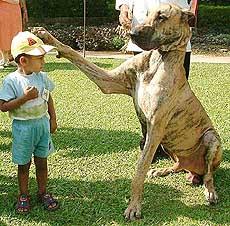 nat Dog Breeds In India