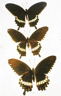 Brown Patch Diagnosing - Walter Reeves