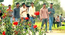 rose festival in chandigarh