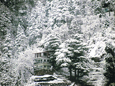 A hill covered with the season's first snowfall in Mussoorie on Saturday.