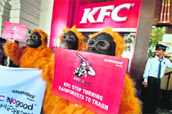 business operations at kfc india Kfc tried to revamp its menu in india cole slaw was replaced with green fresh salads a fierier burger called zinger burger was also introduced.