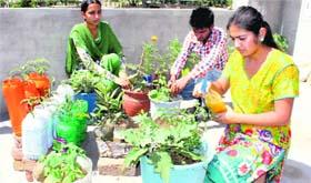 The tribune chandigarh india bathinda tribune for Terrace kitchen garden india